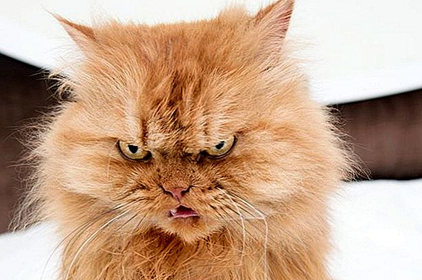 Cuteness Interviews Garfi The World's Angriest Cat