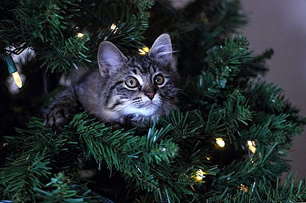 Cara Simpan Cat Away From a Xmas Tree