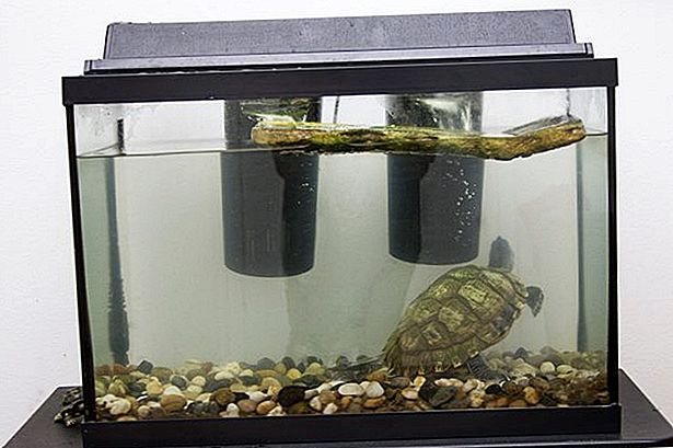 Wie man Turtle Tanks sauber hält
