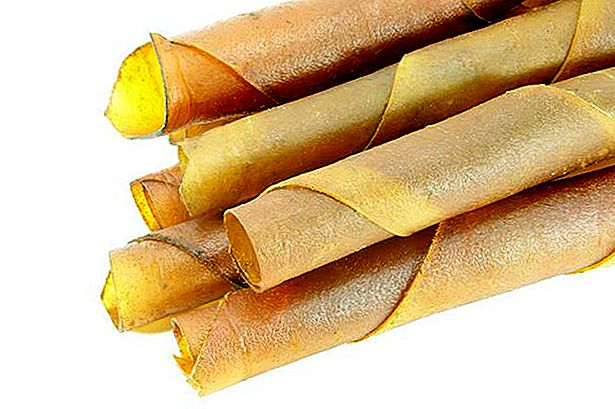 Quels sont les dangers de Rawhide Chew Sticks?