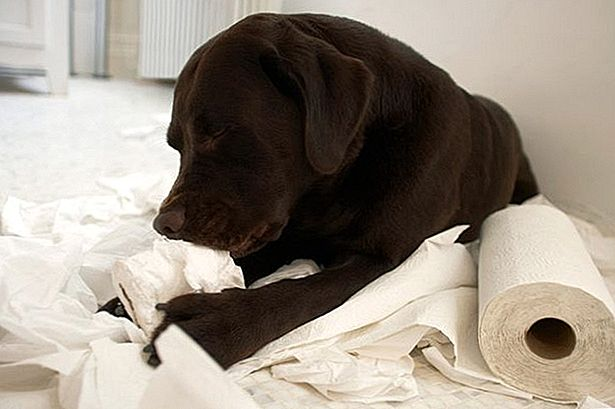 Mengapa My Dog Eat Paper?