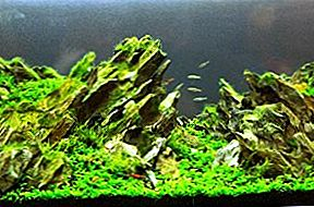 Aquascaping: A Tank of Beauty