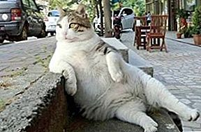 Famous Fat Cat Who Inspired Meme Dihormati Dengan Patung