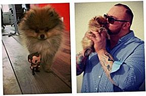 "Game Of Thrones ""The Mountain"" Loves His Pomeranian Tiny"
