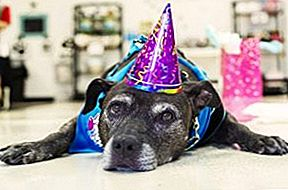 Petco Holiday Wishes er rigtige for Senior Dog, der vinder $ 25.000