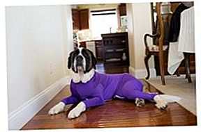 Shed Defender's Doggie Onesie Holder Fur Fra Flying