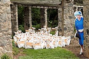 Snuggle Up With The Queen og hennes Corgi Pillow Clones