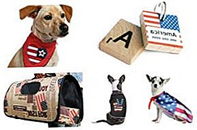 Top 10 Freedom Finds for Your Patriotic Pooch
