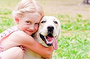 Top 10 Kid Friendly Dogs
