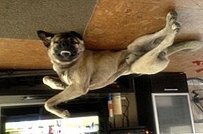 Upside Down Dog of the Week - Razi