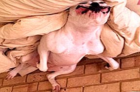 Upside Down Dog of the Week - Spliffy