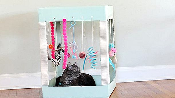 Buat A Kitty Playplace Out Of A Box