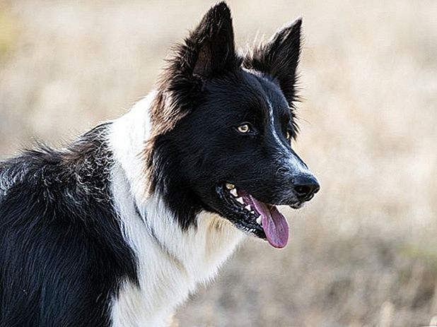 155 Native American Dog Names Rich In Beauty & Meaning