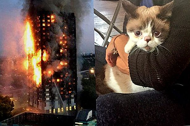 Cat Salvato dal West London Fire Comforts Fellow Survivors nella vicina chiesa