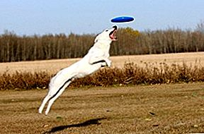 5 High-Flying Disc Dogging Tips From A Pro