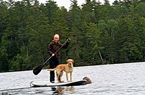 SUP: Stand Up Paddle Boarding med din hund