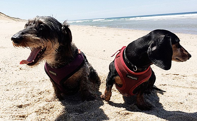 15 Must-Haves For Dogs Who Haaaaaaaaaaaaate Summer Weather