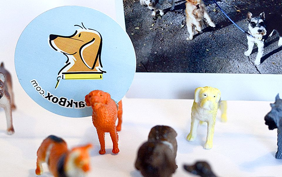 DIY Dog Photo Stands