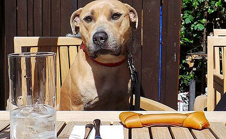 Brooklyn Diner Hosts New York's First Doggy Brunch