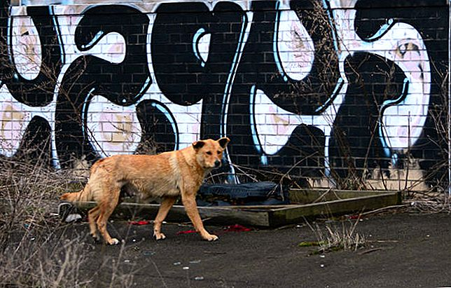 Stray Dogs Of Detroit afsløret som byens ægte diamanter i det grove