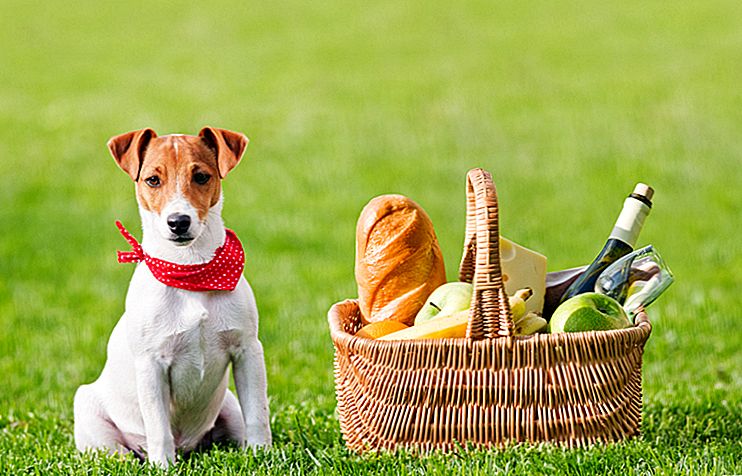 14 Essentials For En Perfekt Picnic Med Din Hund