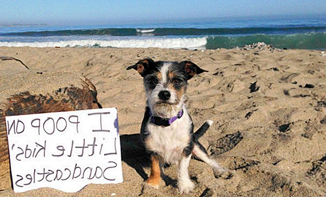 The Ultimate 17 Dog Shames Of Summer