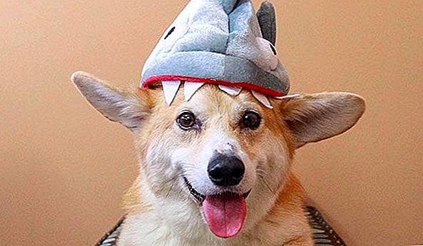 15 Adorable Pups Who Take This Shark Week Thing Bogstaveligt