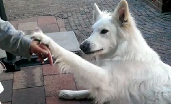 Clever Canine Just Says 'No' To Human's Cigarette