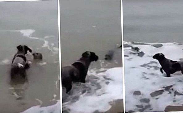 Seal dan Anjing Berkongsi Moment Squee-Worthy On The Shore