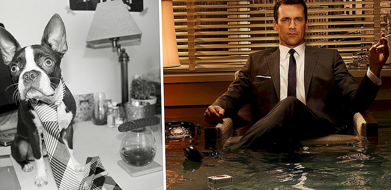 Jeśli Mad Men Characters Were Dogs