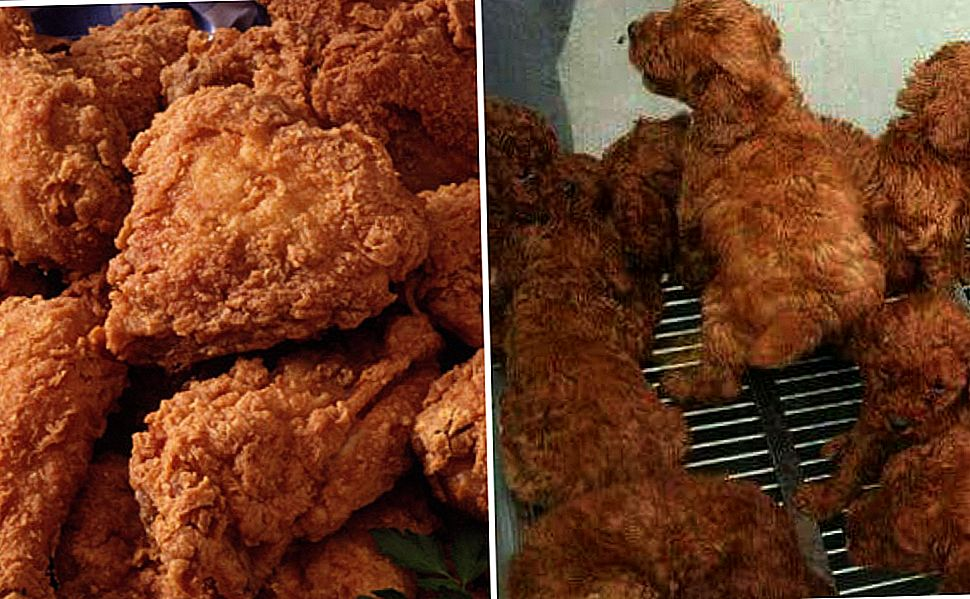 Quiz: Labradoodle eller Fried Chicken?
