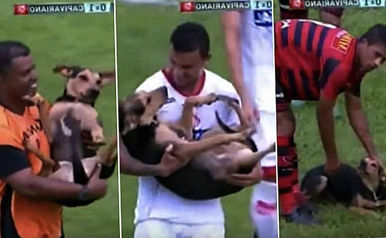 Dog Stray mengganggu Perlawanan Sepakbola Brazil, Memainkan Better Than Most Americans