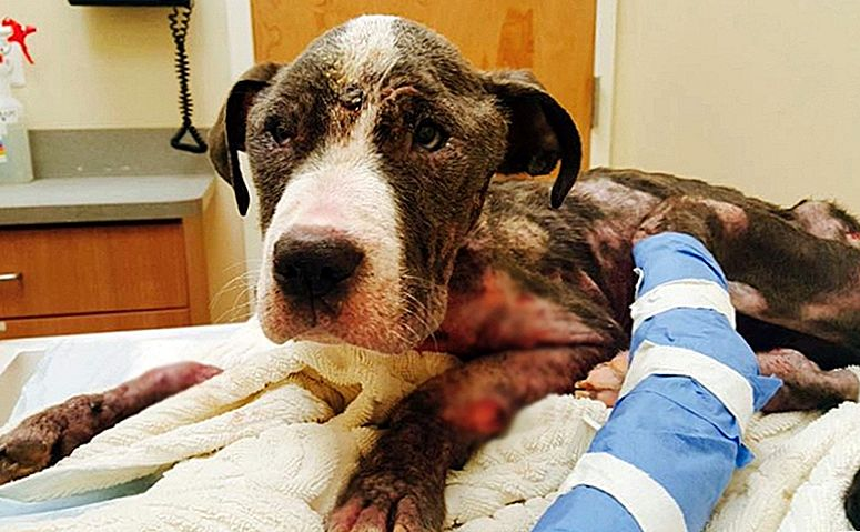 "Puppy Is ""Lucky To Be Alive"" After Being Abused & Killed By A Dumpster"