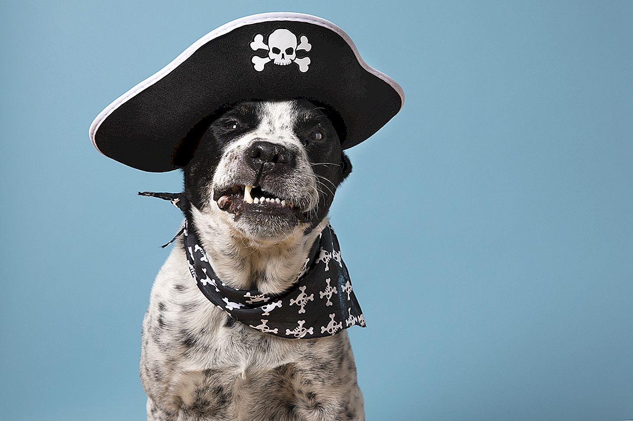 AVAST JA! BarkBox Unboxing Video Wettbewerb!