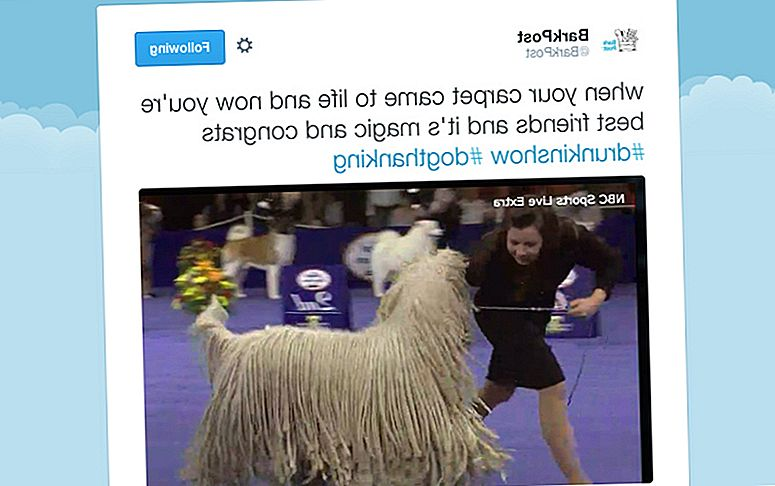 Ini Thanksgiving Penulis Kami Mabuk-Tweeted The National Dog Show