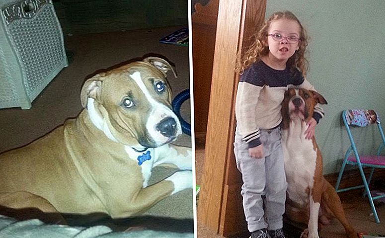 UPDATE: Supporters Rally for å lagre Pit Bull Best Friend Of Little Girl With Cystic Fibrosis