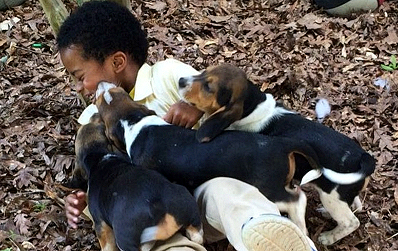 Little Boy Tackled By Mob kecil Puppy Apakah Arti Sejati Of Happiness