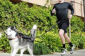 4 Top Tether Training Tips til hunde