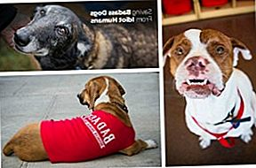 Shelter Spotlight: Badass Brooklyn Animal Rescue