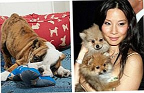 Lucy Liu Lancar Le Roar, Dedicated To Quality Pet Products